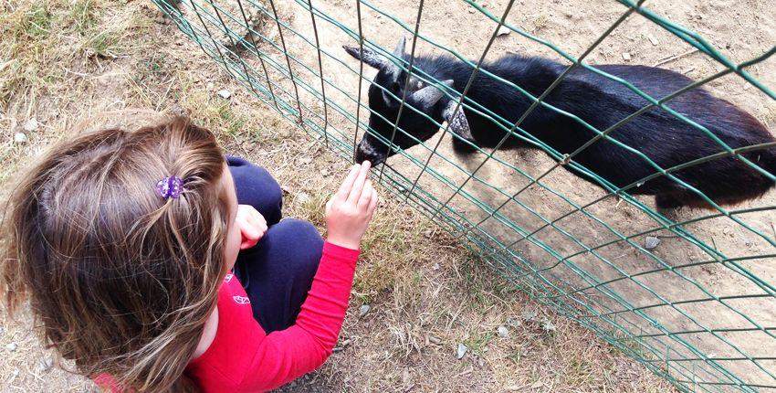 On rend visite aux animaux !